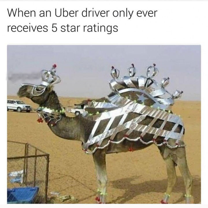meme about a camel dressed fancy and comparing it to a 5 star uber