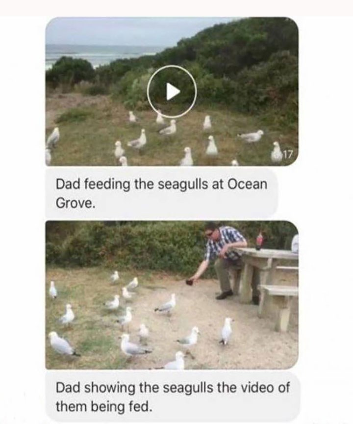 man showing seagulls a video of them being fed