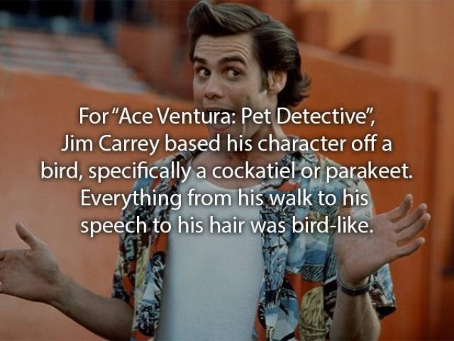 """movie fact - Text - For """"Ace Ventura: Pet Detective"""", Jim Carrey based his character off bird, specifically a cockatiel or parakeet. Everything from his walk to his speech to his hair was bird-like."""
