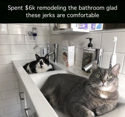 Cat - Spent $6k remodeling the bathroom glad these jerks are comfortable