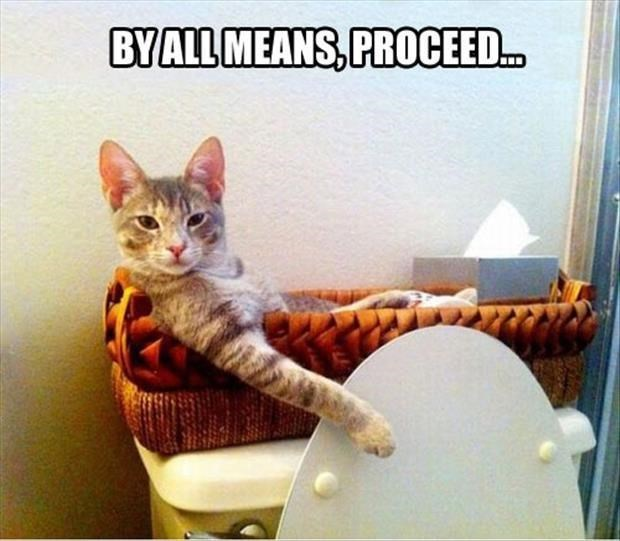 Cat - BYALL MEANS,PROCEED..