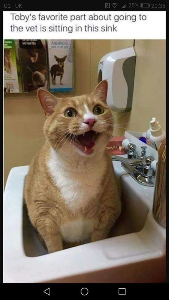 Cat - N 25% 20:35 02- UK Toby's favorite part about going to the vet is sitting in this sink Anesthesia nd your pri s C V