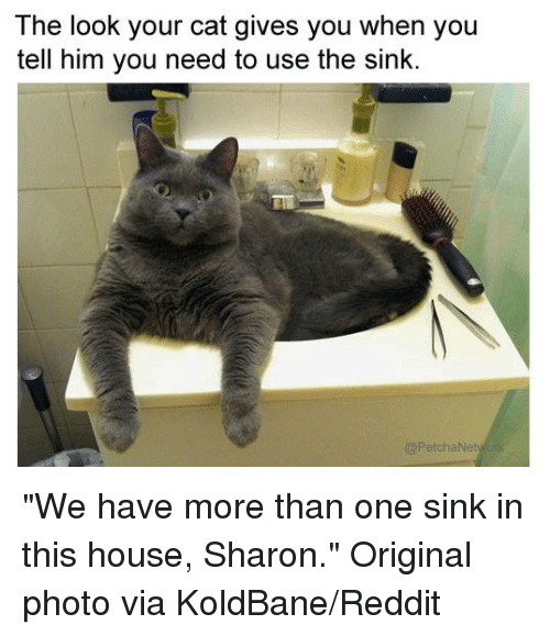 """Cat - The look your cat gives you when you tell him you need to use the sink. @PetchaNetyk """"We have more than one sink in this house, Sharon."""" Original photo via KoldBane/Reddit"""