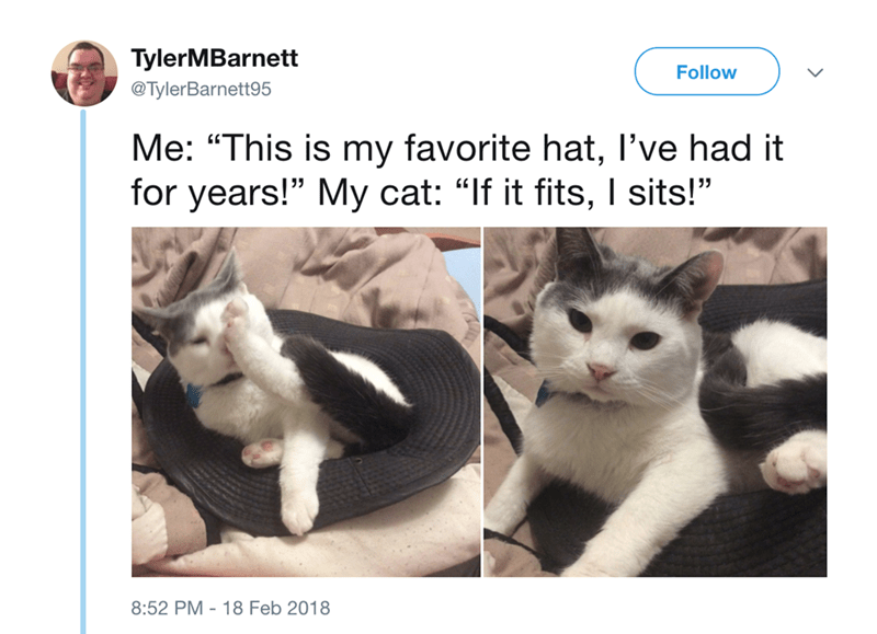 """Cat - TylerMBarnett Follow @TylerBarnett95 Me: """"This is my favorite hat, I've had it for years!"""" My cat: """"If it fits, I sits!"""" 8:52 PM 18 Feb 2018"""