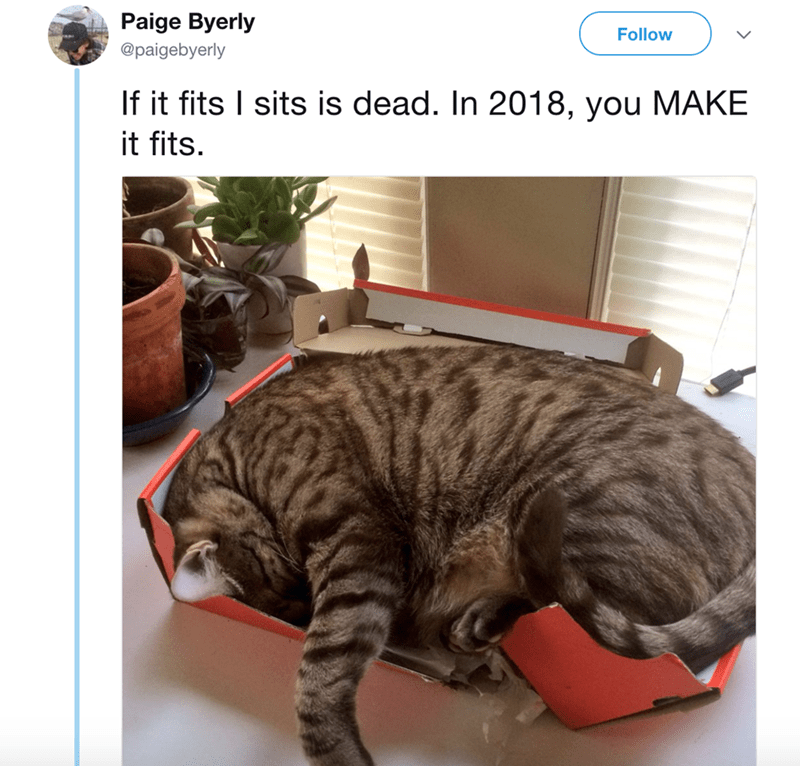 Cat - Paige Byerly Follow @paigebyerly If it fits I sits is dead. In 2018, you MAKE it fits.