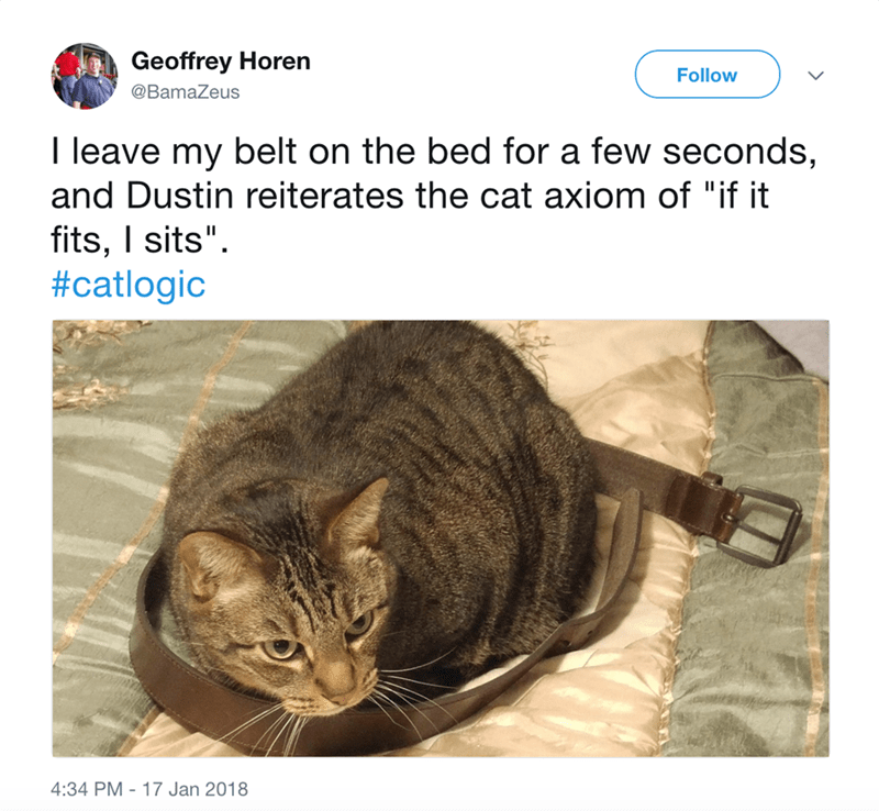"""Cat - Geoffrey Horen Follow @BamaZeus I leave my belt on the bed for a few seconds, and Dustin reiterates the cat axiom of """"if it fits, I sits"""" #catlogic"""