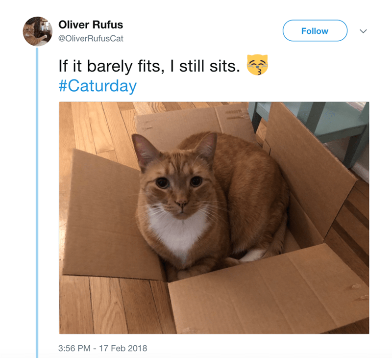 Cat - Oliver Rufus Follow @OliverRufusCat If it barely fits, I still sits. #Caturday