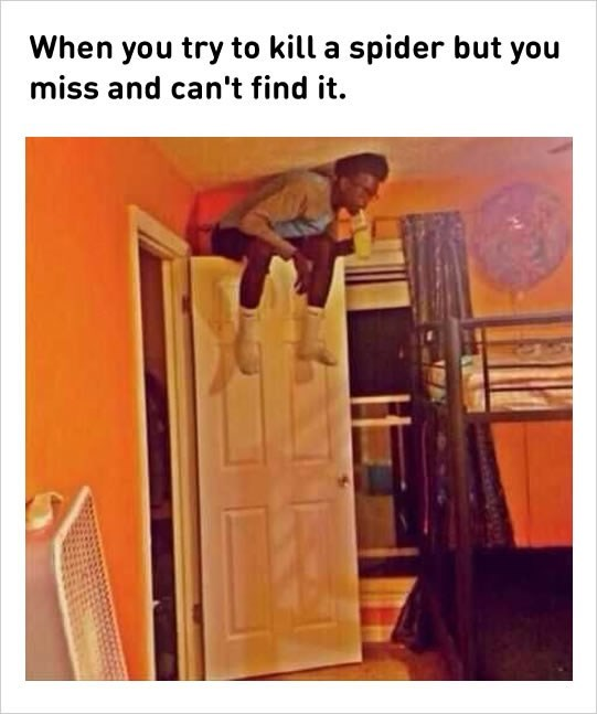 Product - When you try to kill a spider but you miss and can't find it.