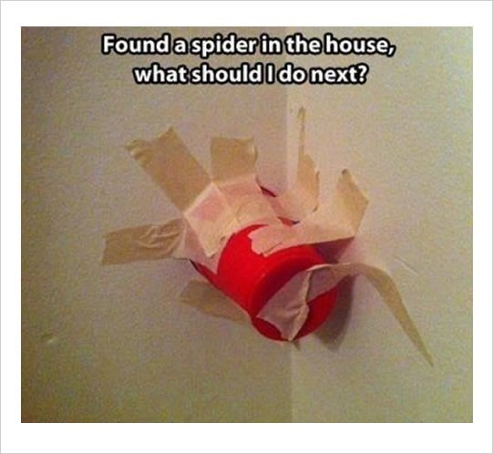 Origami - Foundaspider in thehouse, what should Idonext?