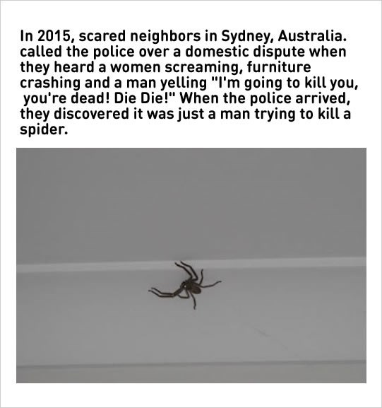 """Insect - In 2015, scared neighbors in Sydney, Australia. called the police over a domestic dispute when they heard a women screaming, furniture crashing and a man yelling """"I'm going to kill you, you're dead! Die Die!"""" When the police arrived, they discovered it was just a man trying to kill a spider."""