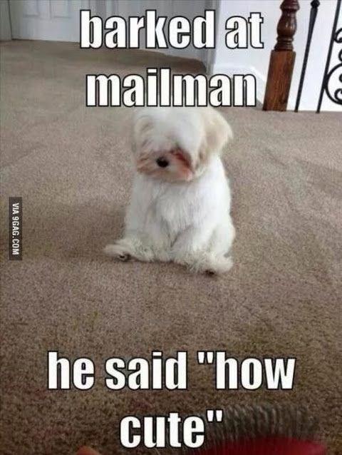 "Dog - barked at mailman he said ""how cute VIA 9GAG.COM"