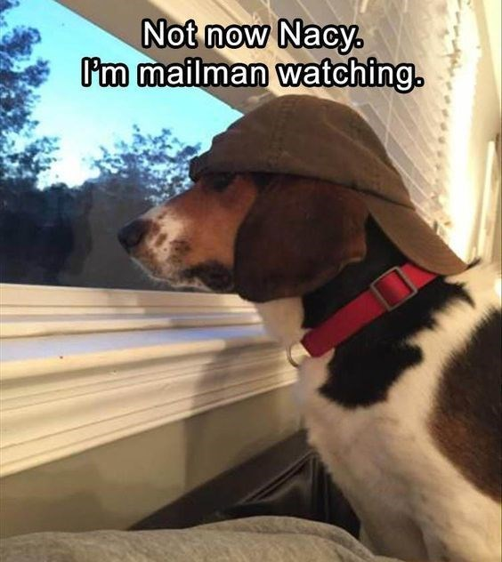 Dog - Not now Nacy. Pm mailman watching.