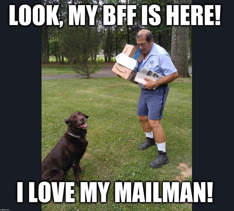 Dog - LOOK, MY BFF IS HERE! I LOVE MY MAILMAN! imgfip.com