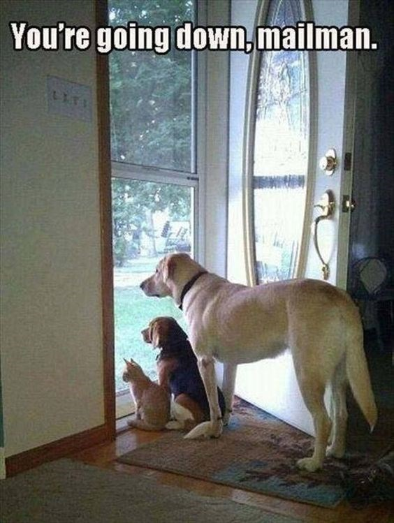 Dog - You're going down,mailman.