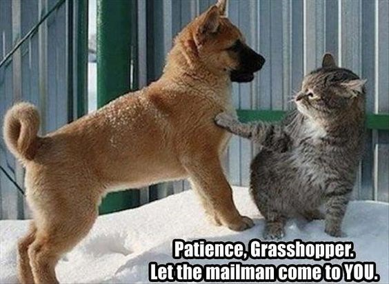 Mammal - Patience Grasshopper Letthe mailman come to YOU.