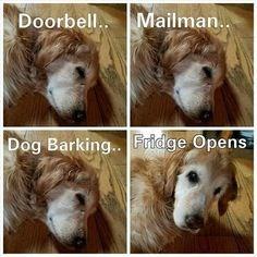 Hair - Doorbell Mailman. Dog Barking... Fridge Opens
