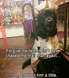 Dog - Forgive me father for have chased the mail man again... Oh, and I bit him a little.