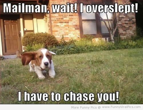Dog - Mailman, wait! loverslept! I have to chase you! More Funny Pics@ www.FunnyViralPics.com