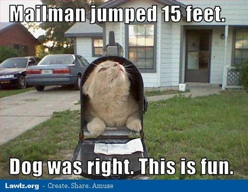 Photo caption - Mailman jumped 15 feet Dog was right. This is fun. Create. Share. Amuse Lawiz.org