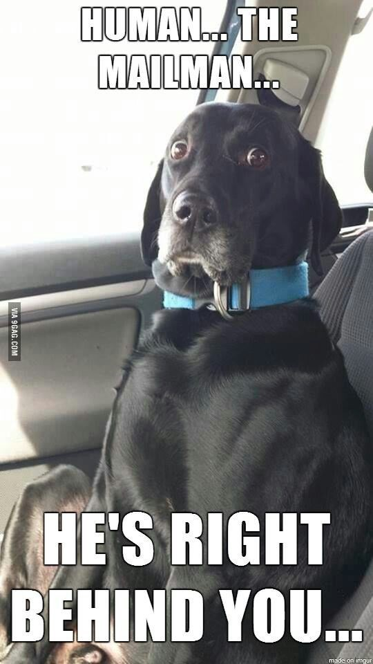 Dog - HUMAN THE MAILMAN... HE'S RIGHT BEHIND YOU... made on imgur VIA 9GAG.COM