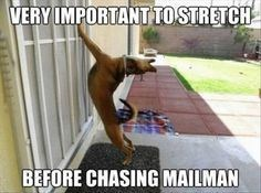 Photo caption - VERY IMPORTANT TO STRETCH BEFORE CHASING MAILMAN