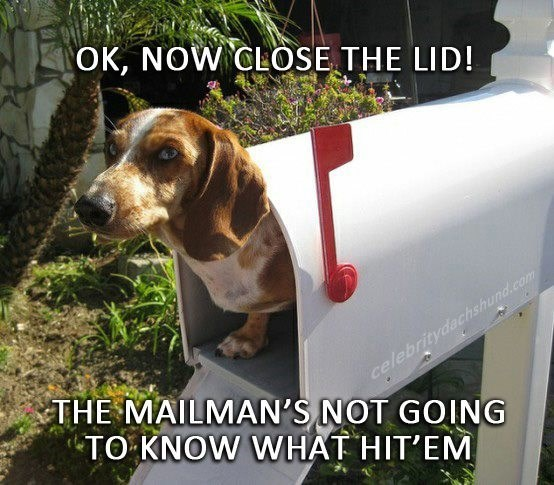 Dog - OK, NOW CLOSE THE LID! celebritydachshund.com THE MAILMAN'S NOT GOING TO KNOW WHAT HIT'EM