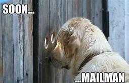 Dog - SOON.. MAILMAN