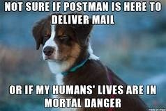 Dog - NOT SURE IF POSTMAN IS HERE TO DELIVER MAIL OR IF MY HUMANS' LIVES ARE IN MORTAL DANGER