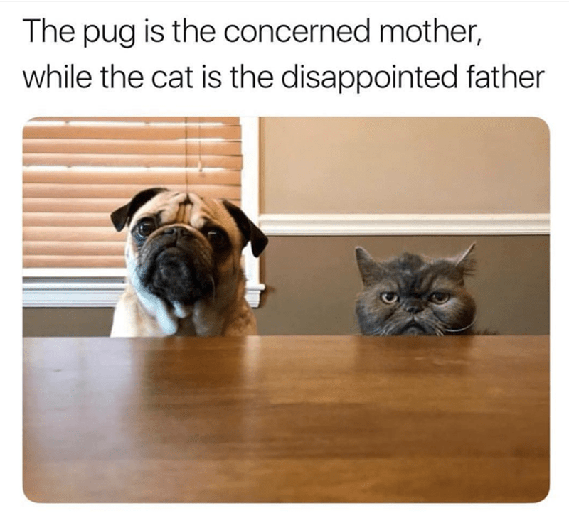 Pug - The pug is the concerned mother, while the cat is the disappointed father