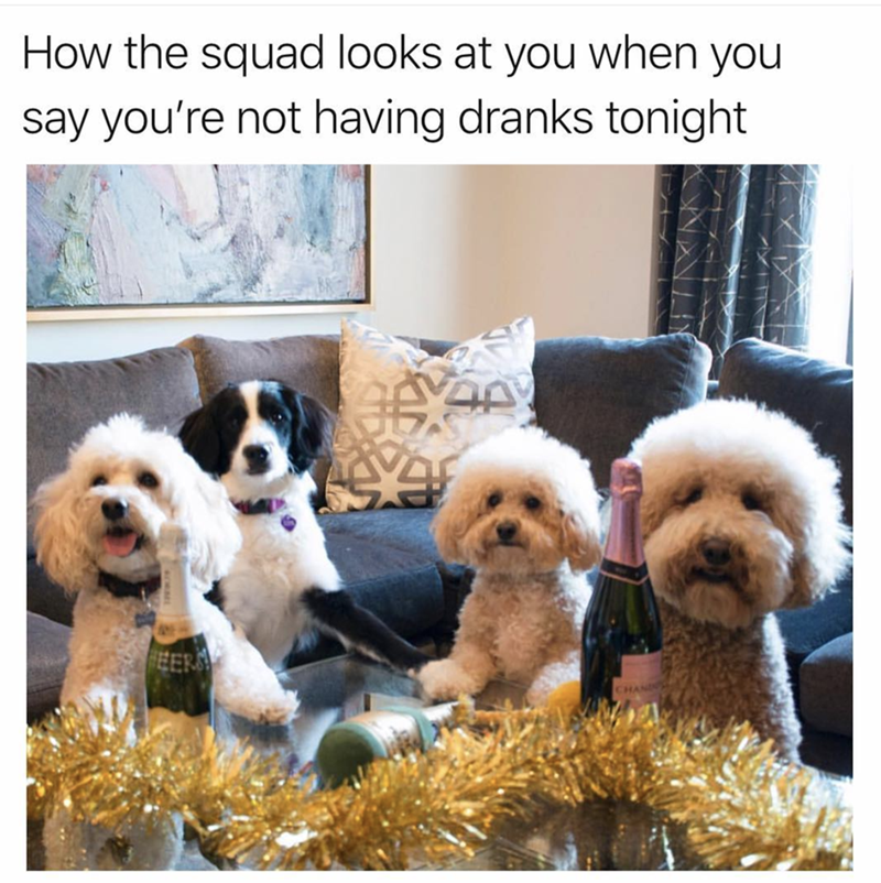 Dog - How the squad looks at you when you say you're not having dranks tonight EER