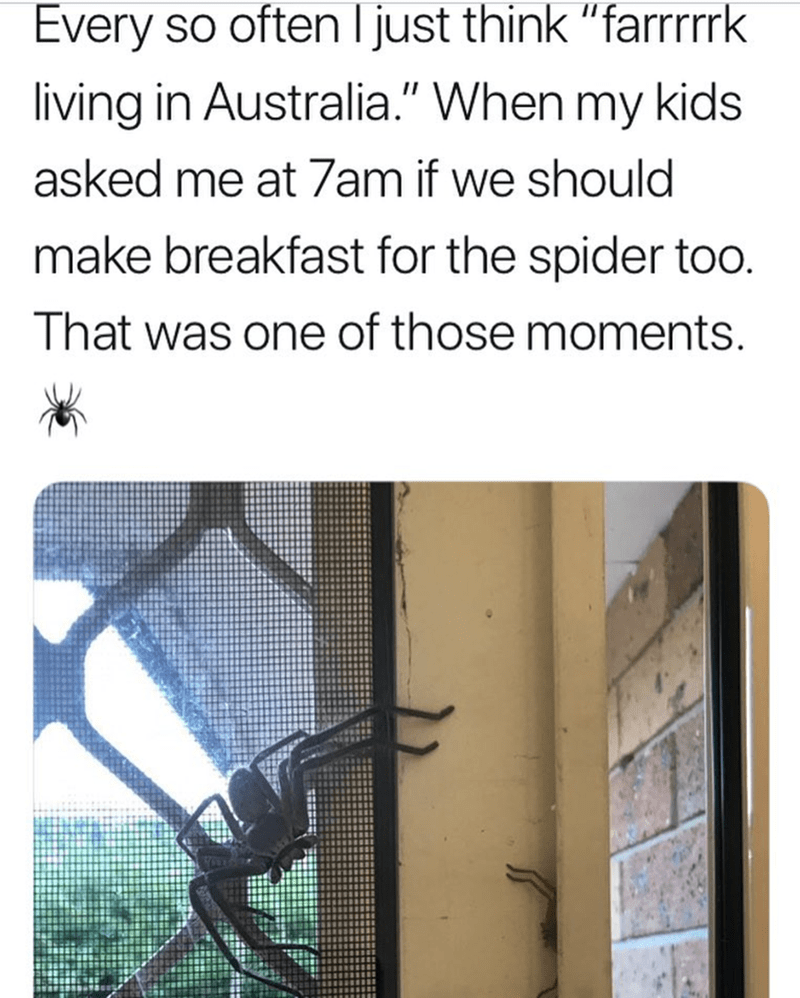 "Text - Every so often Ijust think ""farrrk living in Australia."" When my kids asked me at 7am if we should make breakfast for the spider too. That was one of those moments."