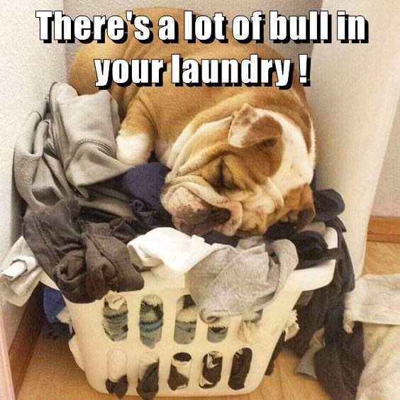 There\'s a lot of bull in your laundry !