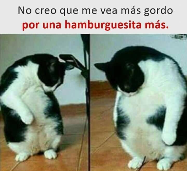 Cheezburger Image 9129687552