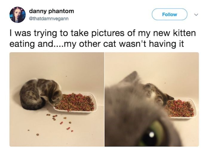 Organism - danny phantom Follow @thatdamnvegann I was trying to take pictures of my new kitten eating and....my other cat wasn't having it