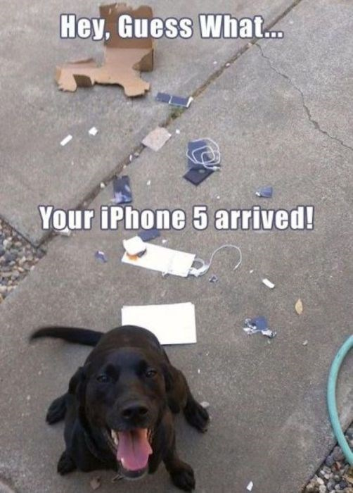 Dog - Hey, Guess What... Your iPhone 5 arrived!