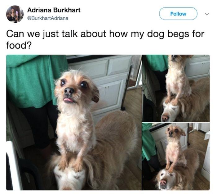 Dog - Adriana Burkhart Follow @BurkhartAdriana Can we just talk about how my dog begs for food?