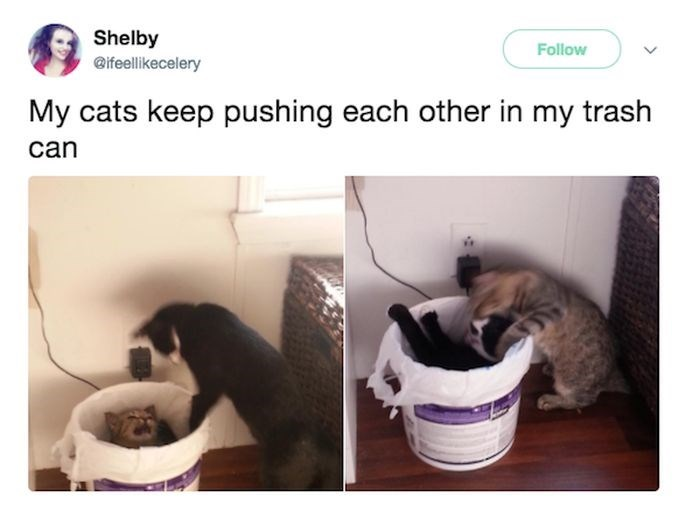 Cat - Shelby @ifeellikecelery Follow My cats keep pushing each other in my trash can