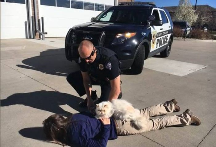 weird animal - Police dog - FORT C POLIGE