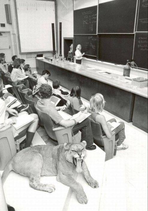 weird animal - Class - A