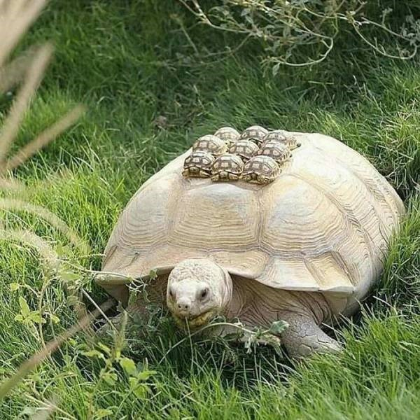 weird animal - Tortoise