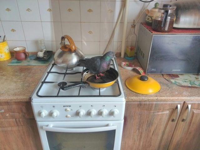 weird animal - Gas stove - gorenjea