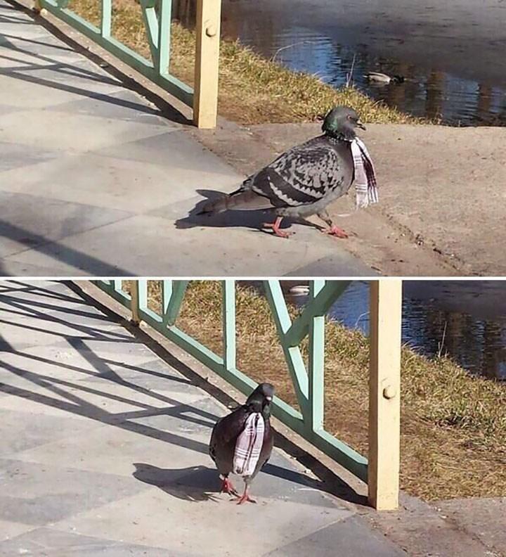 weird animal - Bird