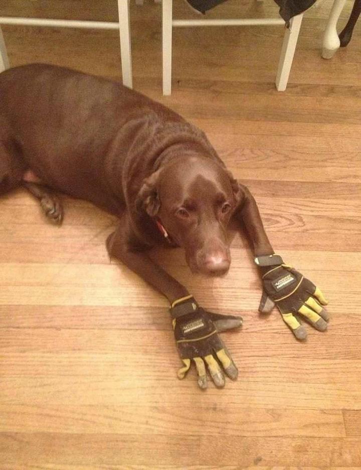 weird animal - Dog breed