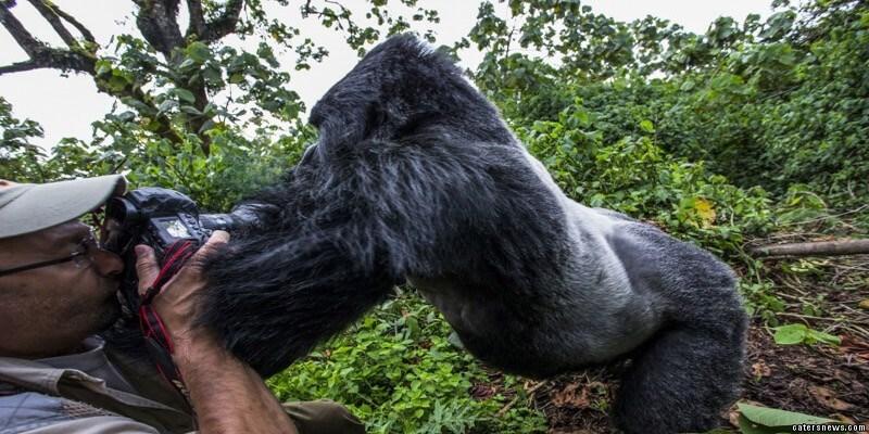 Primate - 0atersnews.gom