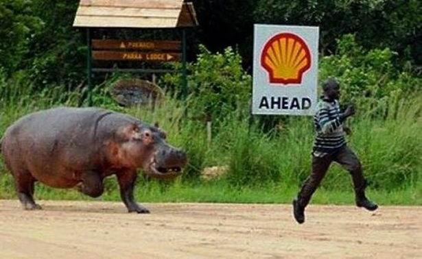 Terrestrial animal - AHEAD