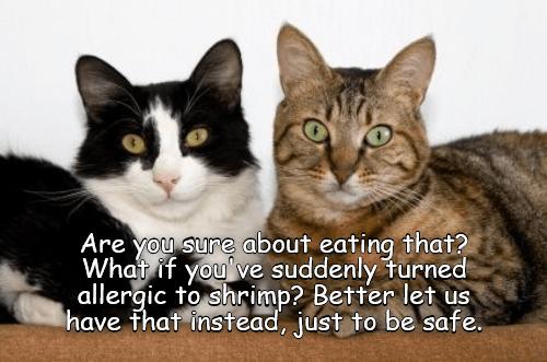 good plan lolcats lol cat memes funny cats funny cat