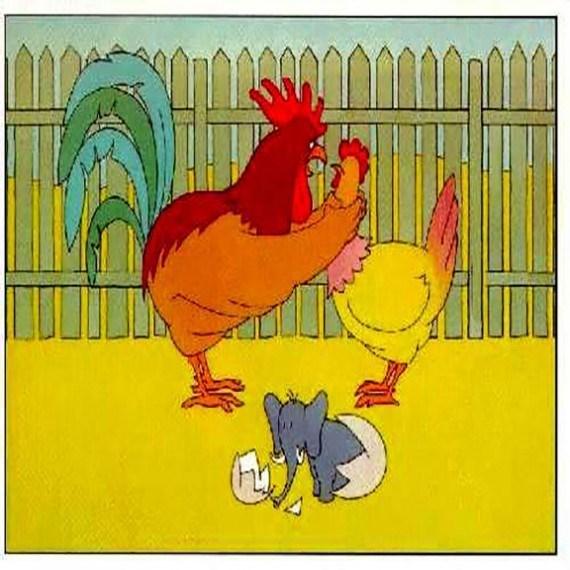 Chicken - 0