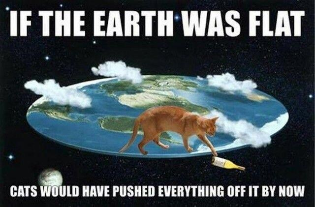 meme - Organism - IF THE EARTH WAS FLAT CATS WOULD HAVE PUSHED EVERYTHING OFF IT BY NOW