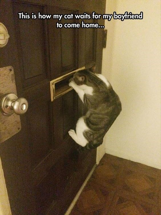 Door handle - This is how my cat waits for my boyfriend to come home...