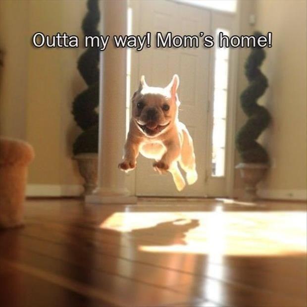 Dog - Outta my way! Mom's homel